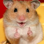 You have been #blessed by the positivity hamster. May your day be as bright as her smile. https://t.co/WMZcodxJVV