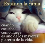#ConEstaLluviaSeAntoja ser felino así. https://t.co/UpHmvyGXN0
