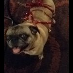 GUYS MY PUG IS MISSING. HELP ME BRING HER HOME. SHE IS BLIND. PLEASE IF SEEN CONTACT ME. https://t.co/7WoQNSDE1K