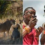 Los guerreros keniatas que pasaron de cazar leones a protegerlos con GPS. https://t.co/kVUkOyrBbp https://t.co/53R2fP5ymO