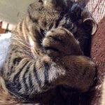 福を招いたら、逃げないようにギュッとするニャン(ฅωฅ)♪ #招き猫の日 https://t.co/tZBwOKB7sl