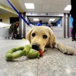 #NewBluehand #Bluehand Guide dogs to pop up at Leeds venues https://t.co/u6MiEFuZZB #Leeds #yeplive https://t.co/MVBisXpgCS
