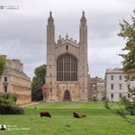 #WelcomeToCambridge #freshers including this calf born at Kings! #Cambridge https://t.co/KuoiCxqzSD