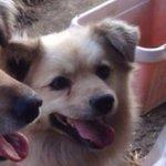 @kss_yoko #拡散希望 #埼玉県🔷代理投稿🔷探しています坂戸市、川越市、鶴ケ島市にはお住まいの方ご近所で見かけたことはありませんか? 何か情報がありましたらどんなことでもいいので教えてくださいお願いします #迷い犬 #迷子犬 https://t.co/whCMECHInx