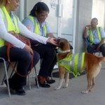 Éste  es Zorro, adoptado por gente buena quienes le brindan respeto y protección. Son los empleados del #metrobus https://t.co/XQvjD4Tbec