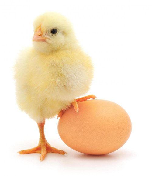 Chicken or the Egg?  Where does community start? With the platform, or the members? #cmgr https://t.co/xgwEs3ctvf