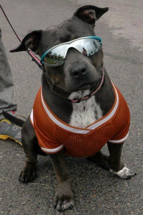 Dude! You know how I know your cool?! Because ur going to join us for our National Pit Bull Awareness Day event!
