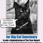 >@BigCatRescue needs YOUR vote to win #Animaltarian of the Year So easy! PLS Vote DAILY HERE⏩https://t.co/hgwrzGkCUb https://t.co/Qop9n2LfrO