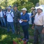 2400 plantas fueron sembradas en cerro La Ahumadera, Guayape. #HondurasSiembraVida @JuanOrlandoH #Olancho https://t.co/wC5Ev0ASyV