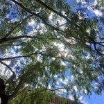 Pretty day here in downtown Phoenix. #phoenix #azweather #azwx #fox10phoenix https://t.co/D9aXLQOk9d
