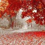 Зима и листопад встретились в один день. Осень в штате Миннесота https://t.co/mp88b5IdEE