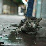 """Ini nasib hidup gelandangan. Tiada siapa peduli. Tiada siapa sayang."" - Kucing Jalanan #AdoptDontShop https://t.co/q5qv4UZ2yO"