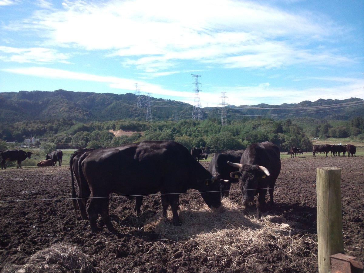 希望の牧場とも言われてます。 日当たりも良く、適度な斜面と広大な土地でいい場所で、牛達も黒々してました。 https://t.co/AWGePAdFIN