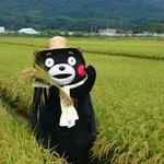 今日は益城町にやって来たモン。稲が元気よく育ってるモン☆ https://t.co/eX6EVpOF9y
