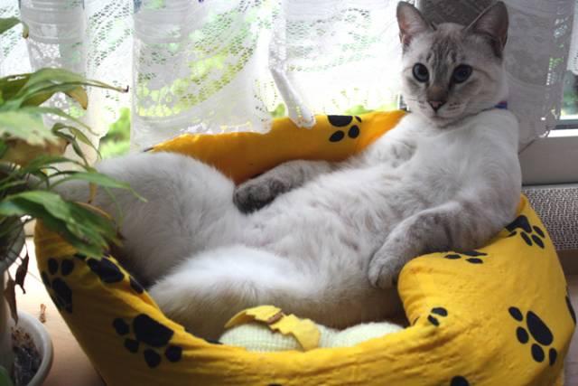 社長 https://t.co/H0N9Cv4H1k #cat #猫 #写真 #ふくにゃん https://t.co/USlv4D1kUE