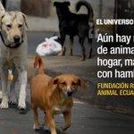 Se prepara caminata por el Día Mundial de los Animales, en #Guayaquil ► https://t.co/Jm93nmMoVZ https://t.co/agXFndMC4z