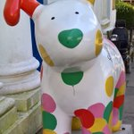 Brighton seems to have taken @SnowdogsBTS to its heart. Heres Smiley, the one closest to us. https://t.co/8u1B8V5UPW