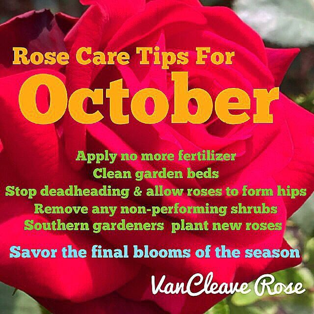 Rose Care Tips For October. https://t.co/lISiWUjqxx #RoseChat https://t.co/l23vACmDuK