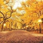 New York City. Autumn in Central Park. Here: https://t.co/BgmOPEMbO3 #nyc #photography #newyorkcity #ttot https://t.co/BzNFHHTwr9