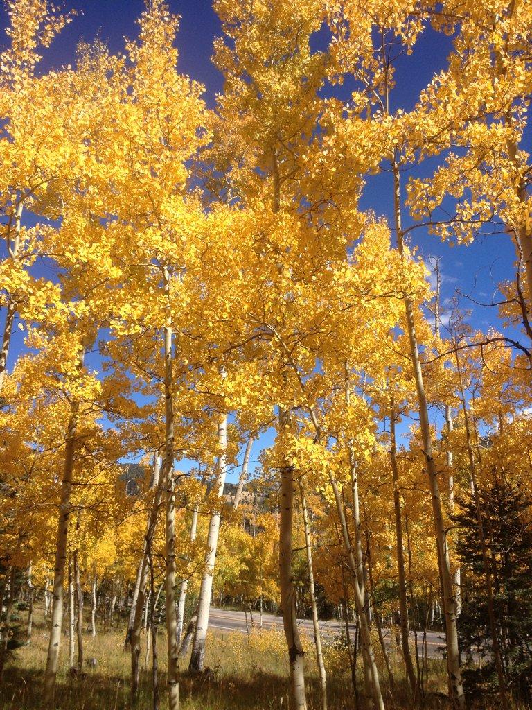 Fall foliage at Cuchara Pass. #colorado https://t.co/9LJTvjobvH