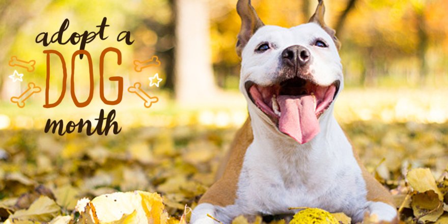 Post a pic of your pup with #NutrishPets and we just might surprise you during #AdoptADogMonth!
