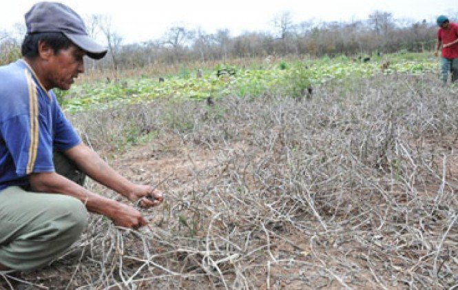 Productores del municipio de Puna, piden apoyo a las autoridades por falta de alimentos debido a la sequía.