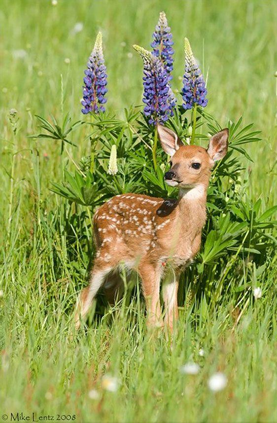 Bambi :) https://t.co/z5DVuOulaC