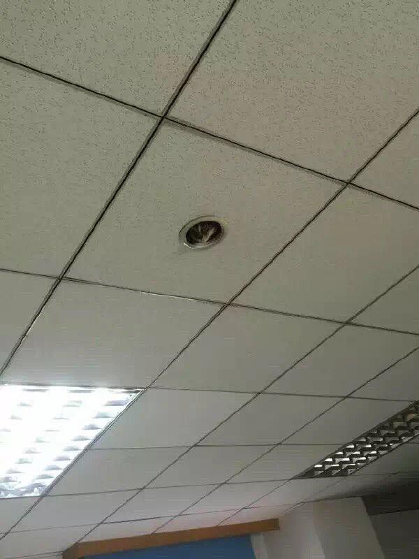 同僚から送られてきた写真。新型の監視カメ……ラ!?