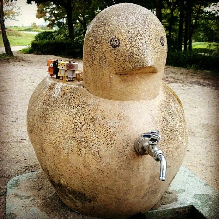 たぶん鳩にゃ!#ニャンボー#にゃんぼー#nyanbo