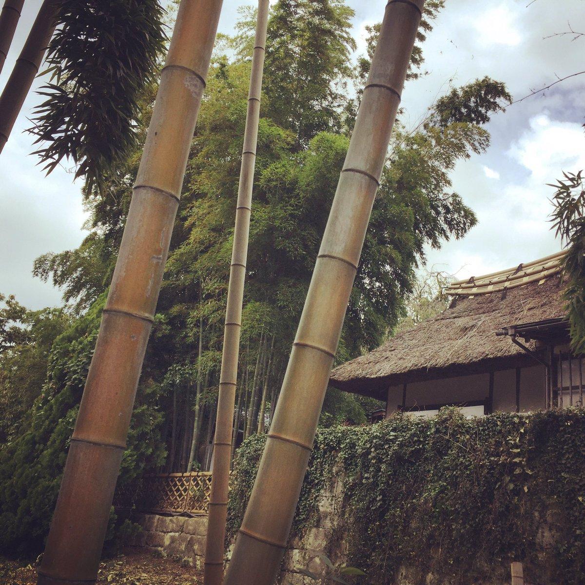 竹藪と生垣の続く細い道に惹かれて。途中、視界に飛び込んできた家をマヨイガかと思った。