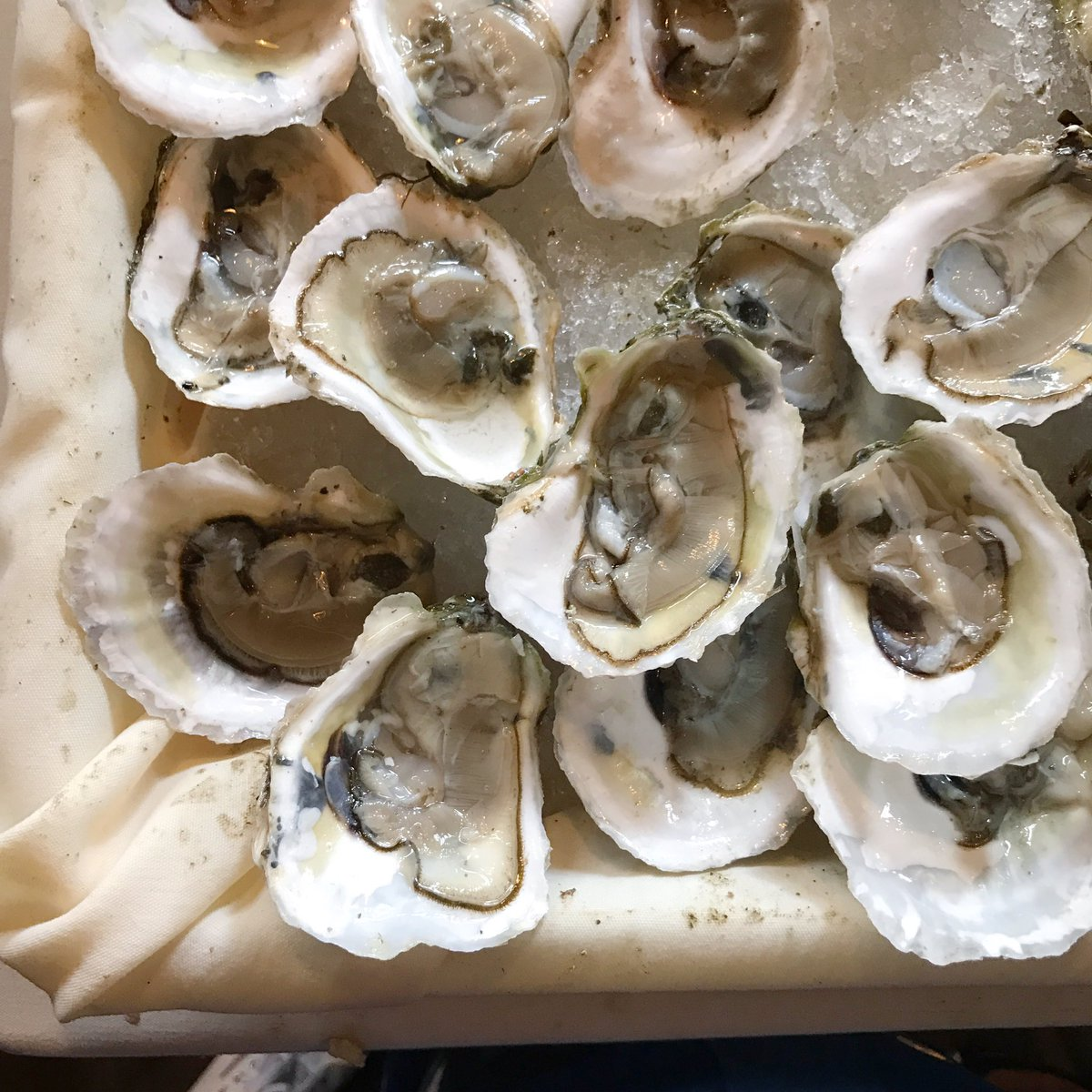 The beautiful Mystic, CT oysters we featured today at @NYCWFF #OysterBash @iloveMysticCT #NYCWFF https://t.co/dXs1IEsZjC
