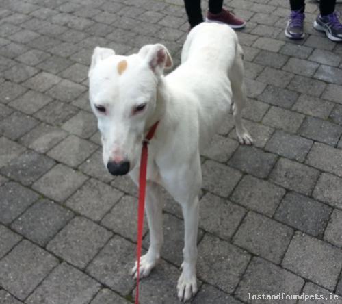 A male dog was found on 08/10/2016 in UCC, Western Road, #Cork City https://t.co/wxZ5CKrcXu #fpie https://t.co/0evhmDQcZG