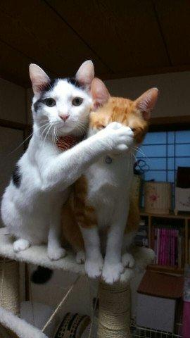 内緒にしてね! https://t.co/s3catRiNdA #cat #猫 #写真 #チュウソン https://t.co/eNAUMwQeyI