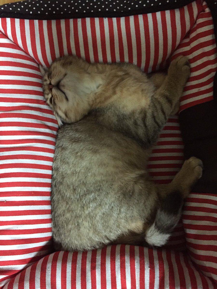 寝方がやっぱり変。#猫  #猫好きさんと繋がりたい