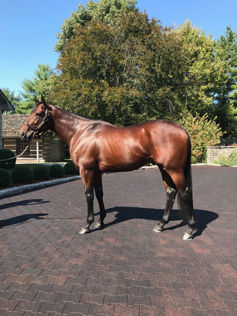 The magnificent American Pharoah gleaming in the Kentucky sunshine this afternoon @coolmorestud @coolmoreamerica https://t.co/0cn9mRzD4W