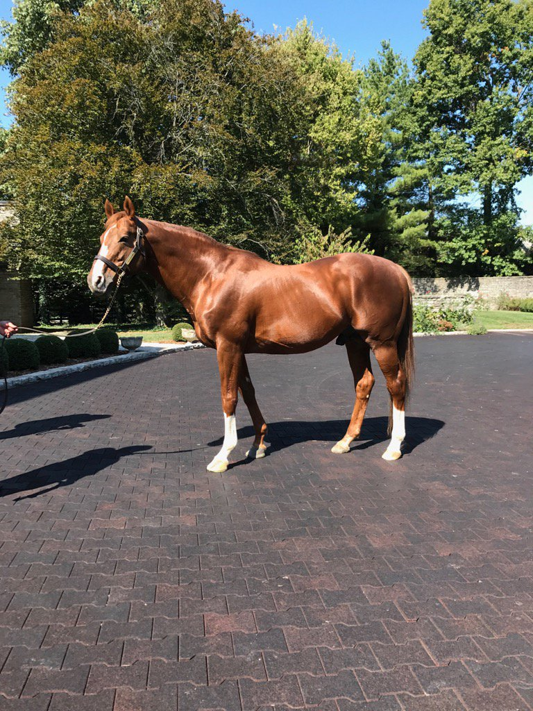 And Giant's Causeway, still the Daddy at 19 @coolmorestud @coolmoreamerica https://t.co/NtGJrUXLkg