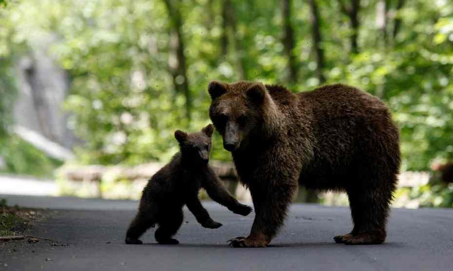 GREAT NEWS: Romania bans trophy hunting of brown bears, wolves, lynx and wild cats https://t.co/MwO5e3BQOb @guardian https://t.co/xXpRO3hQ6y