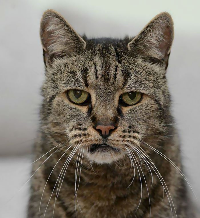 hoje eu to igual ao Nutmeg, o gato mais velho do mundo: https://t.co/6AdWeP9pFT