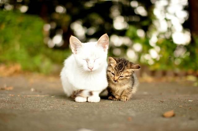 寄り添って生きる。 https://t.co/4lfNo959lG #cat #猫 #写真 #りきまる https://t.co/rgPprDJlnD