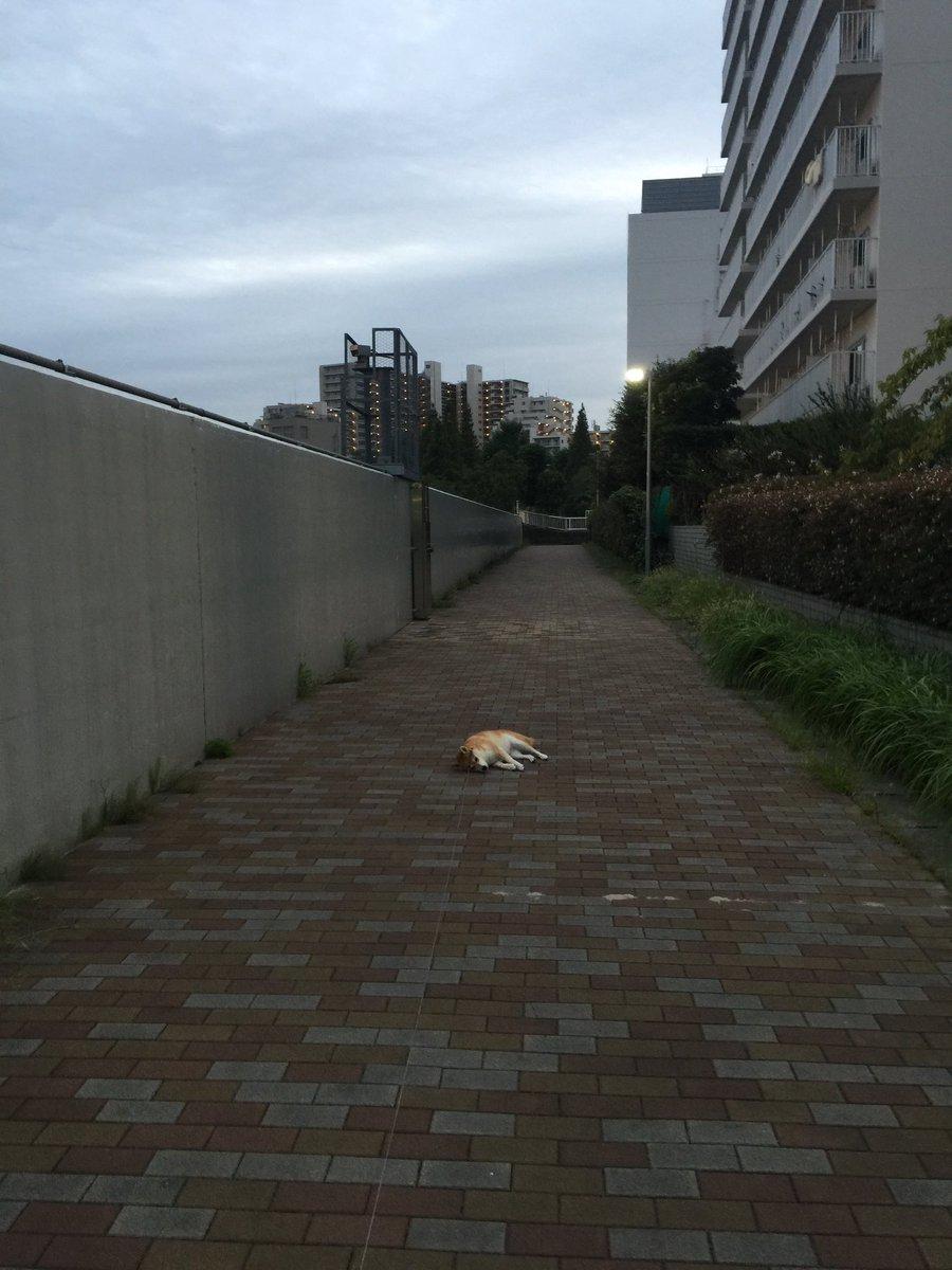 無邪気に横たわる愛犬を撮ったつもりが、孤独な行き倒れの姿みたいに撮れてしまった…