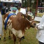 Uhuru outbids Kidero, buys 560kg bull at trade fair auction