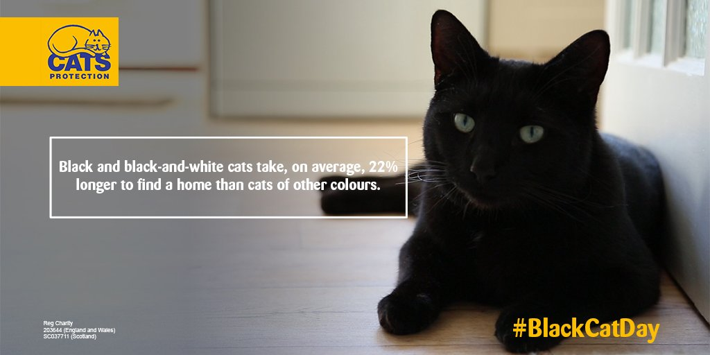 Did you know this shocking fact about black cats? Retweet to spread awareness about #BlackCatDay on 27 October! https://t.co/XjvUQoSEQQ