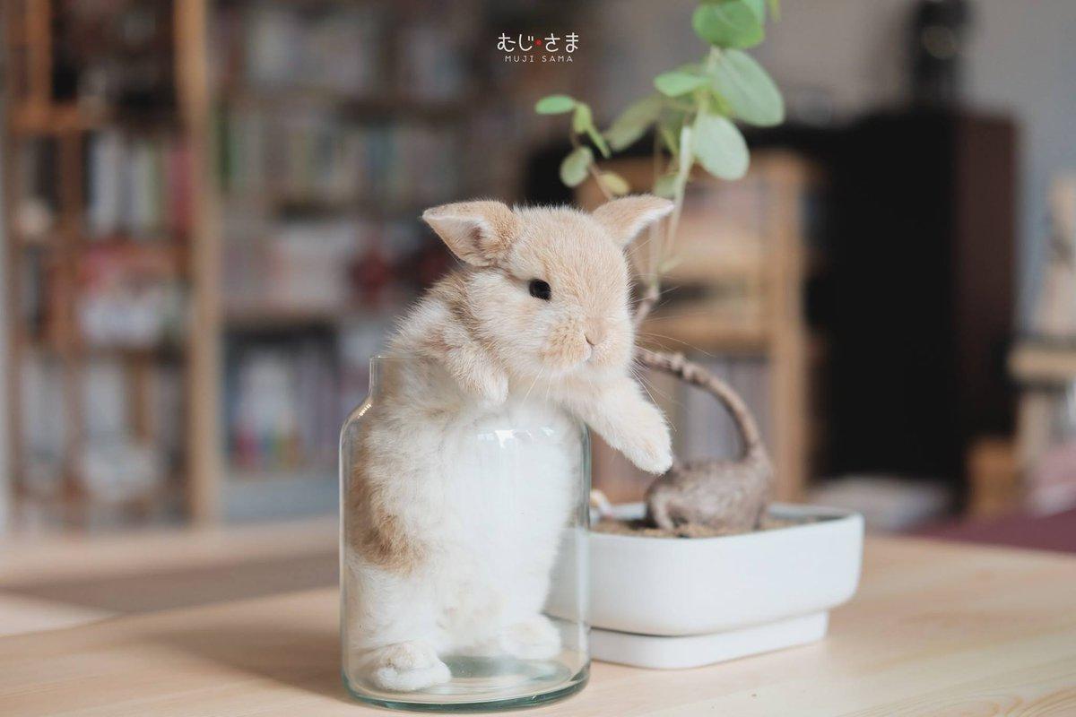 """พัฒนาการ ของกระต่ายน้อย """"มิกุ"""" ตั้งแต่แรกเกิดจนถึงปัจจุบัน"""