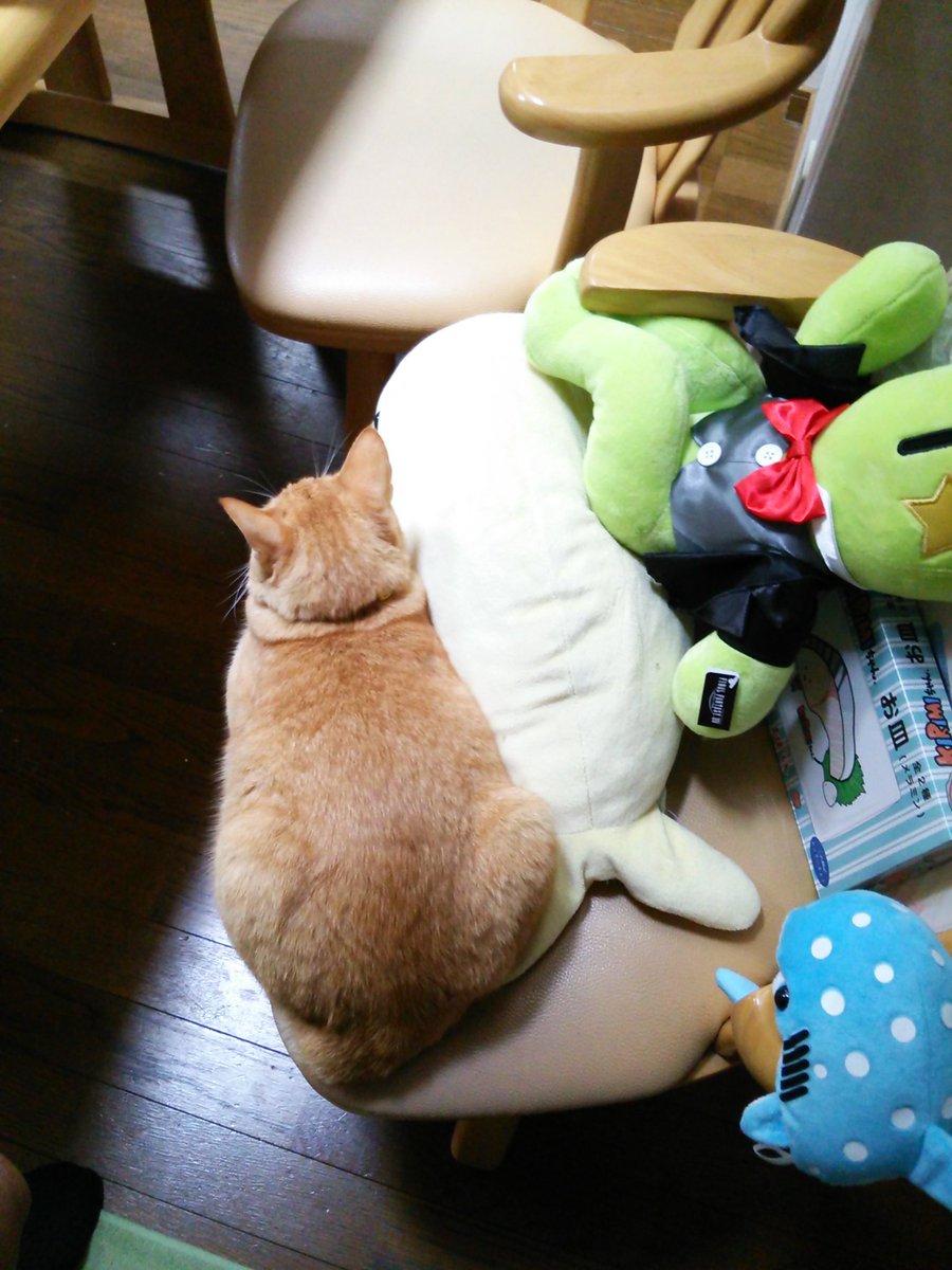 おはようございます。肌寒い朝。新聞を取りに行くのが、億劫になります。ニャル子さん…意地でも、そこに座るんですね(;´Д`