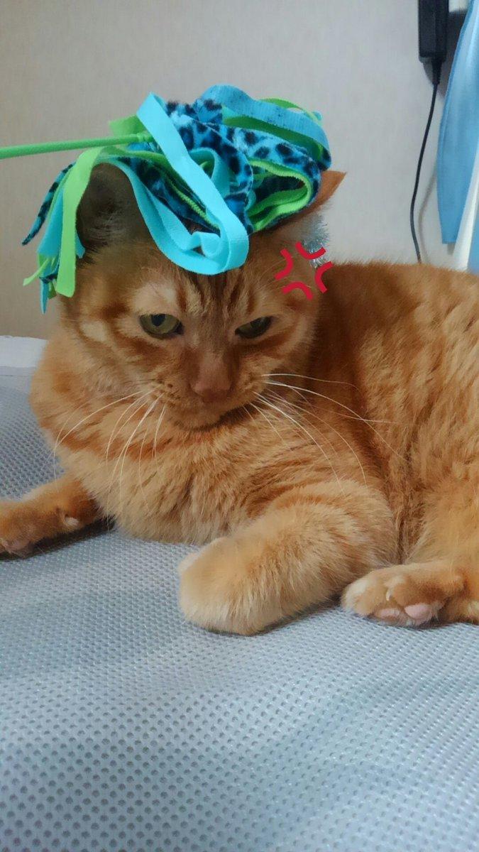 おはようございます🙋今朝は晴れ☀連休の方は待ちに待った晴天ですね😃猫じゃらしを頭に乗せられて「にゃめんにゃよー!😾💢」と