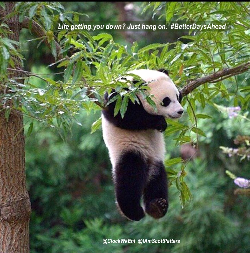 Life getting you down? Just hang on.  #BetterDaysAhead https://t.co/tDfWT8i2pY