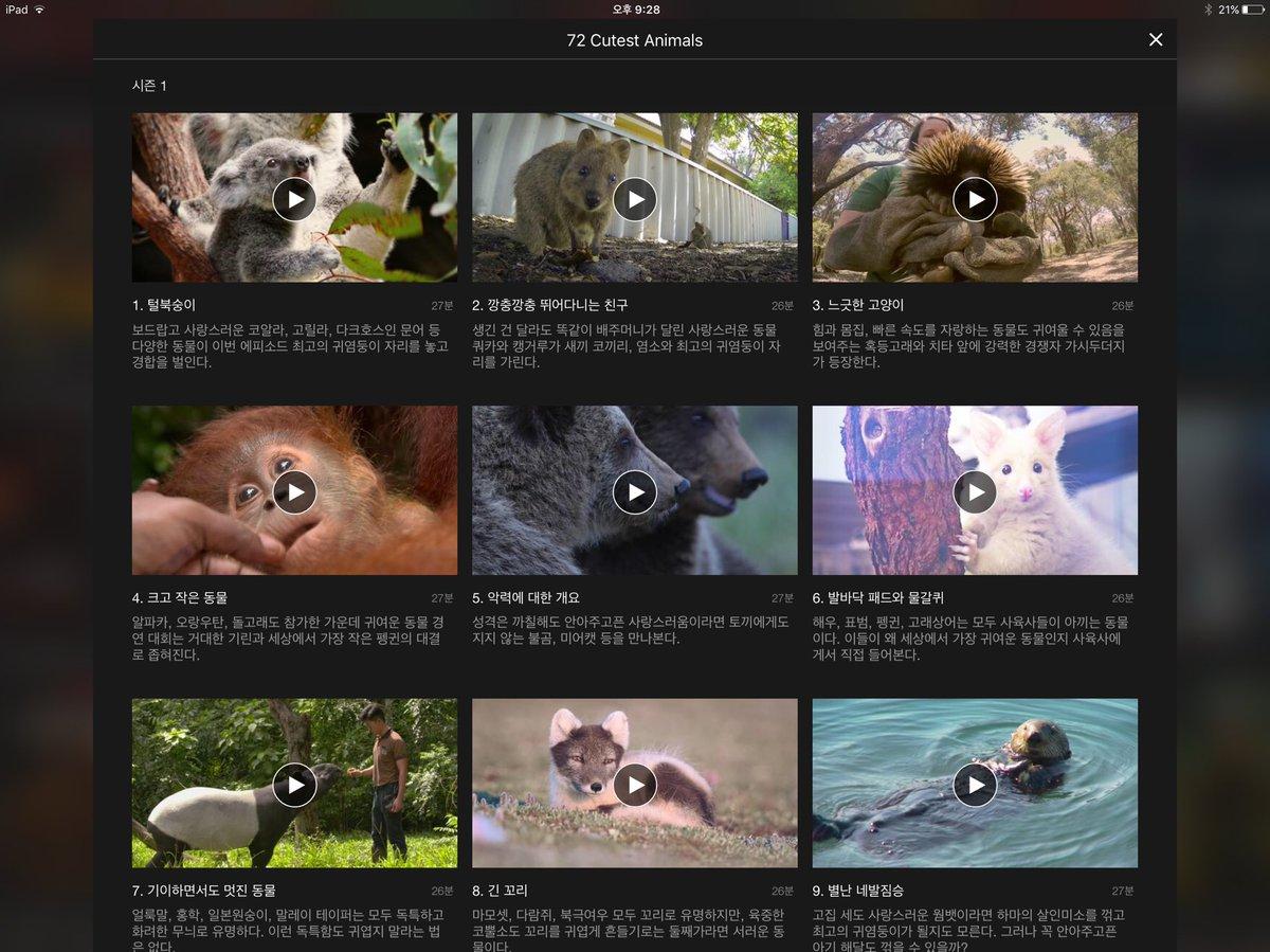 귀여운 동물 덕후 여러분, 넷플릭스에 72 Cutest Animals라는 다큐멘터리 시리즈물이 있습니다. 자세한 설명은 생략한다. https://t.co/lMZZNkNPqf