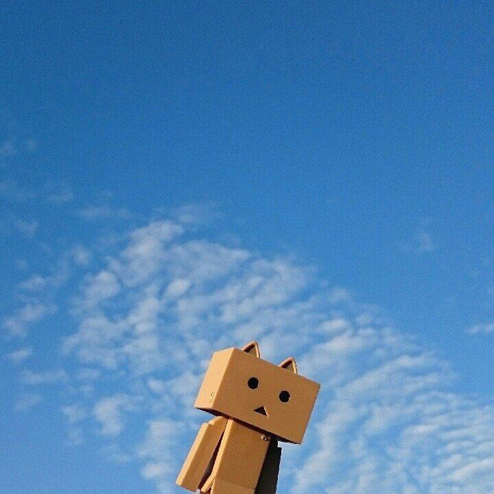 ウロコ雲魚は居ないにゃ!#ダンボー#ニャンボー#にゃんぼー#雲