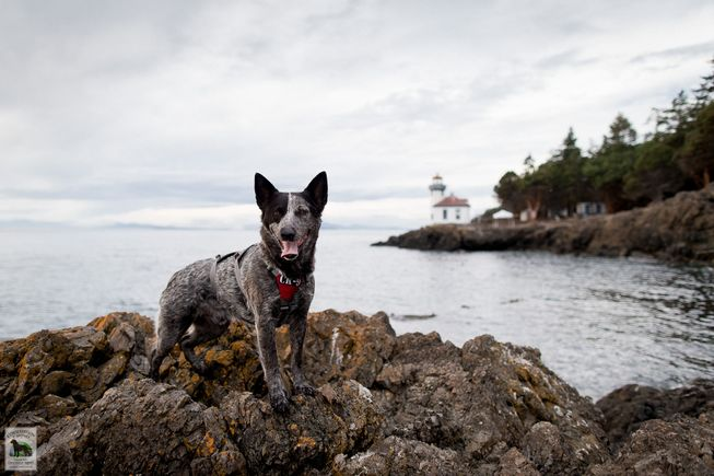 These misfit shelter dogs find careers saving endangered species https://t.co/peROpKn6MF https://t.co/CCAaocyvDJ