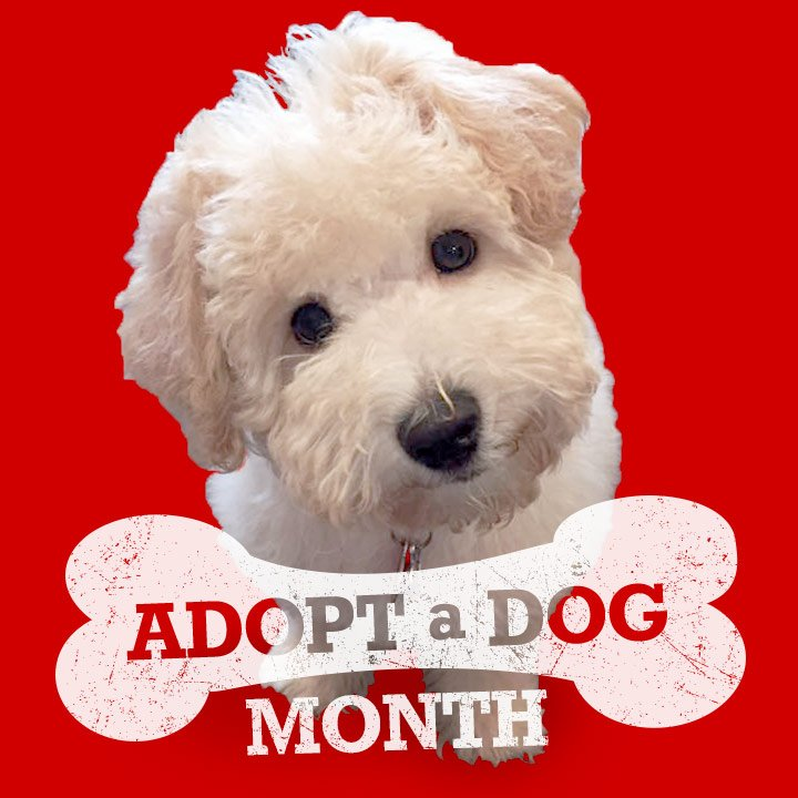 #AdoptADogMonth #Awareness #contest: RT for a chance to win a ☎️ +